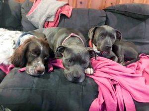 Grace Heatley's dog Pearl sits quietly with her other dogs