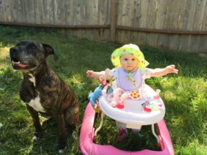 Milo sits peacefully with the Burleigh's baby girl