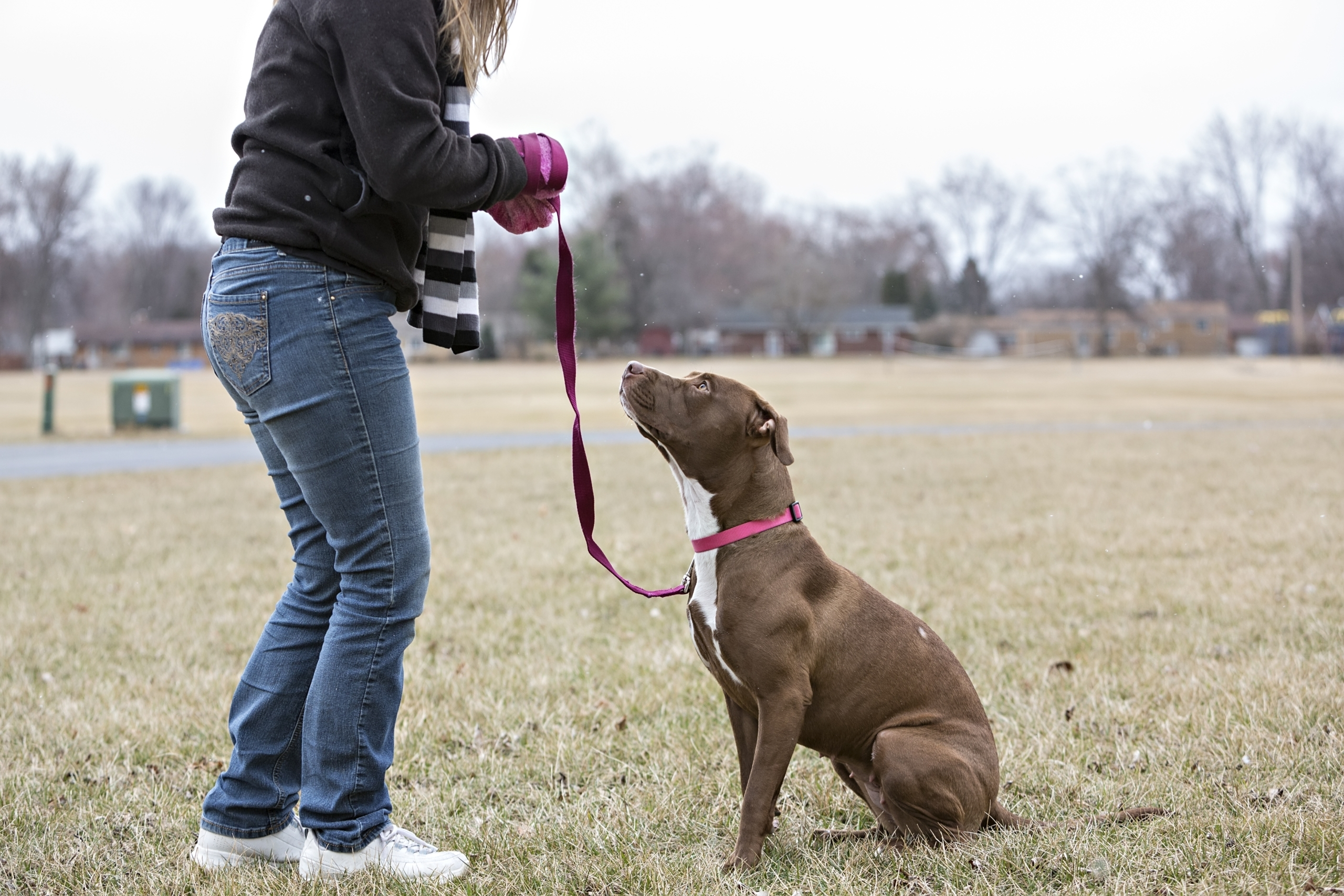 A woman trains her dog in a dog park